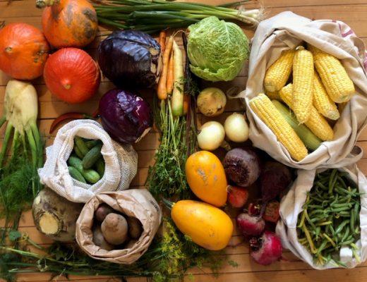 Fermentering av grönsaker